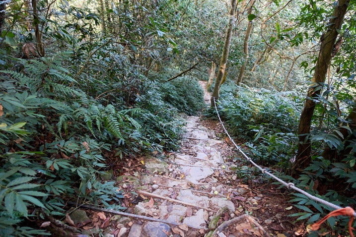 makeshift stairs going down the mountain - trees on either side - WeiLiaoShan Hike – 尾寮山