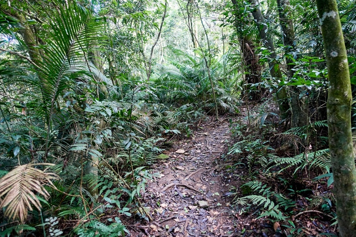 Single-track trail with trees all around - WeiLiaoShan Hike – 尾寮山