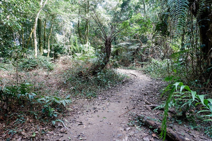 Mountain single-track trail with trees on either side - WeiLiaoShan 尾寮山 trail