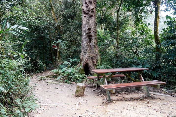 A picnic table and tree next to a trail - WeiLiaoShan 尾寮山 trail
