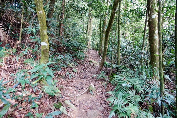 Single track trail with trees on either side - WeiLiaoShan 尾寮山 trail