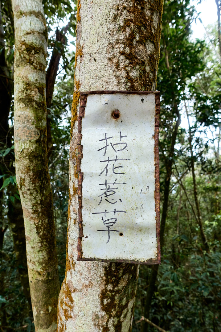 White sign attached to tree with Chinese writing - WeiLiaoShan 尾寮山