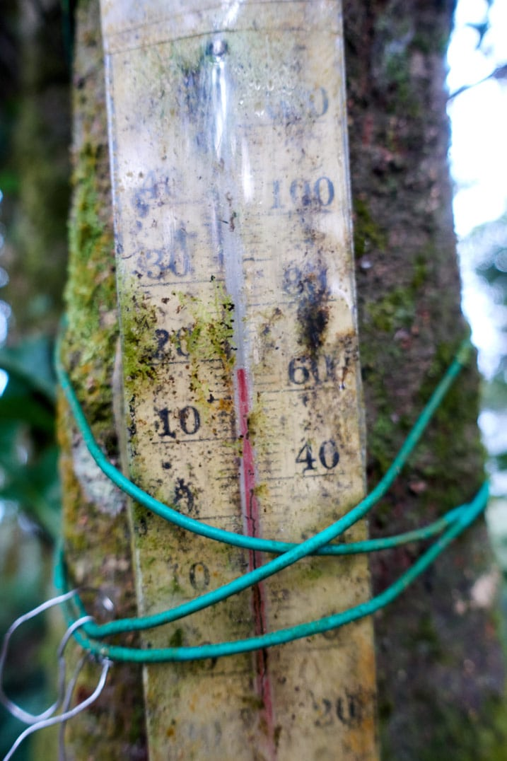 Closeup of thermometer tied up to a tree - WeiLiaoShan 尾寮山