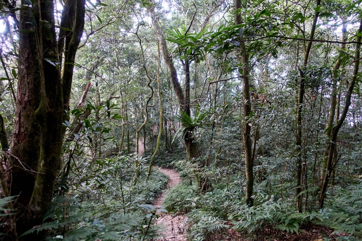 Single track trail in forest - WeiLiaoShan 尾寮山 trail
