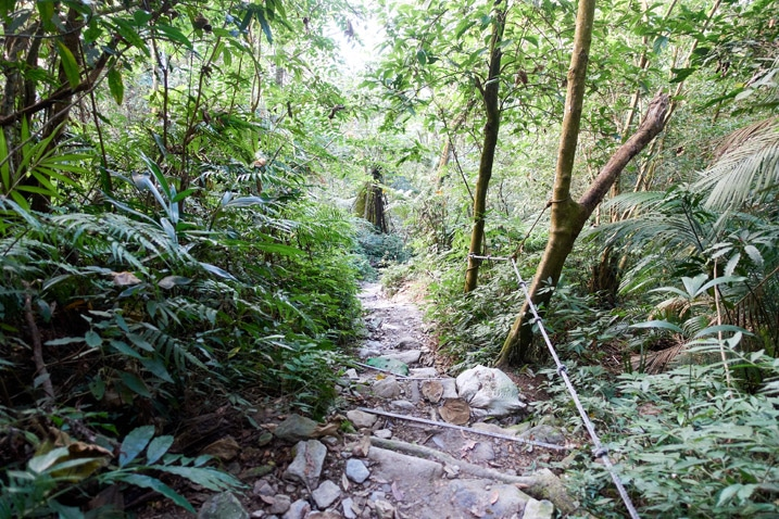 Looking down at makeshift trail steps - rope on the right - trees on either side - WeiLiaoShan 尾寮山 trail