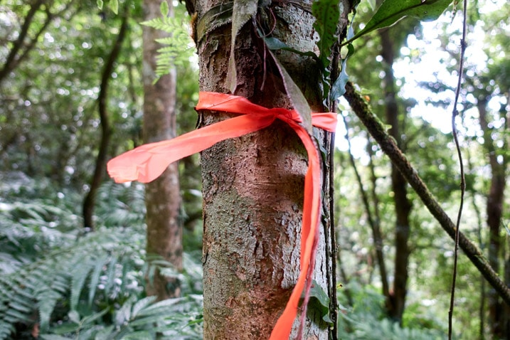 Orange trail ribbon tied around tree - BeiHuLuShan 北湖呂山