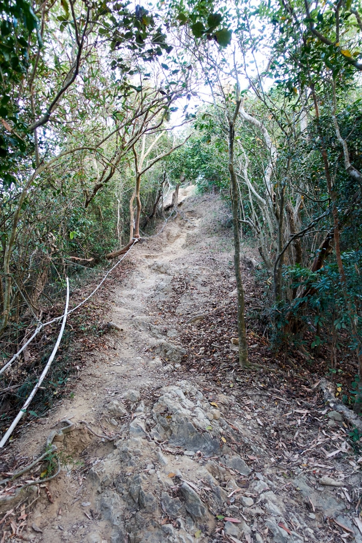 Trail going up the mountain with rope on the 旗月縱走