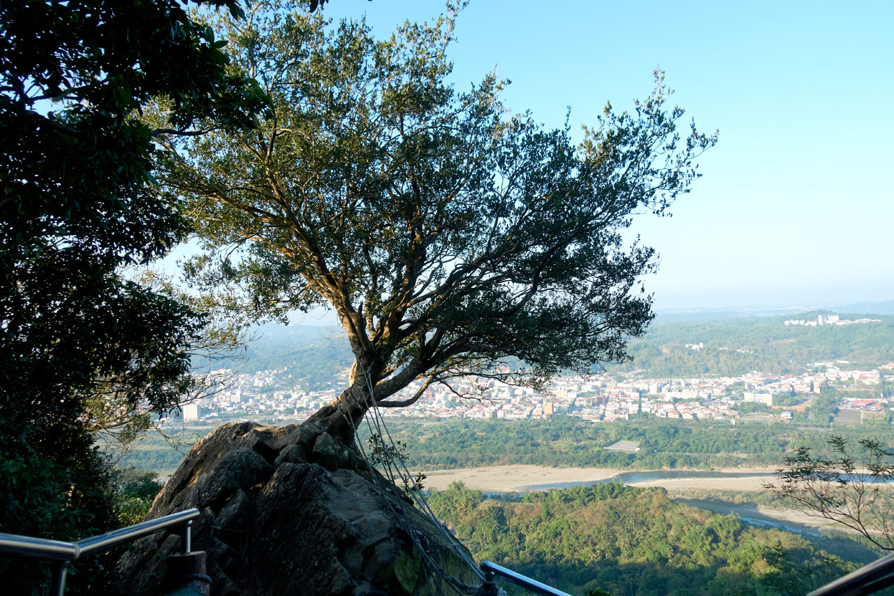 Rocky area with lone tree and ropes - city in background - 旗月縱走