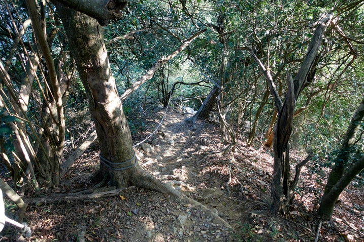 Steep trail looking down - ropes and trees - 旗月縱走