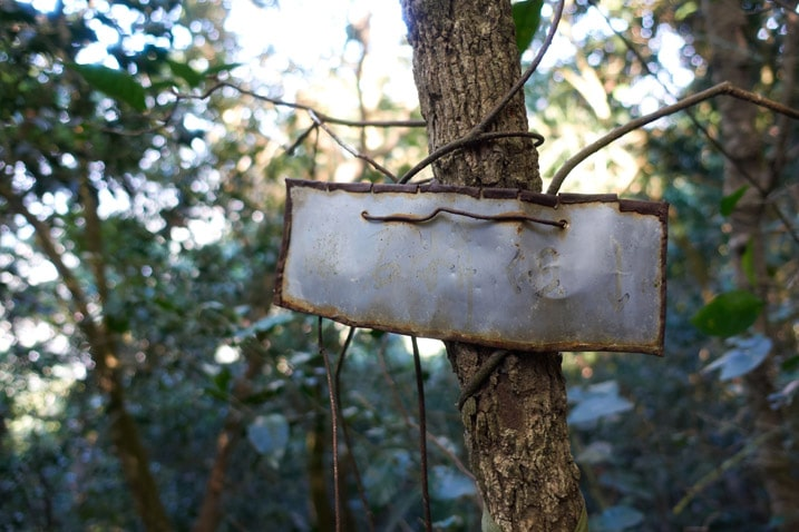 Unreadable metal sign hung around small tree - 旗月縱走