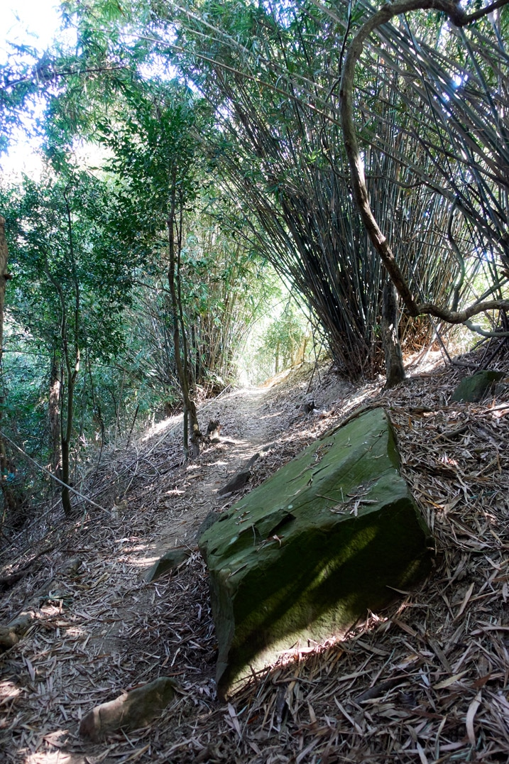 Trail going through bamboo trees - 旗月縱走