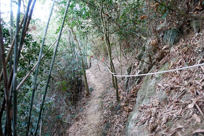 Trail with rope - trees on either side - 旗月縱走