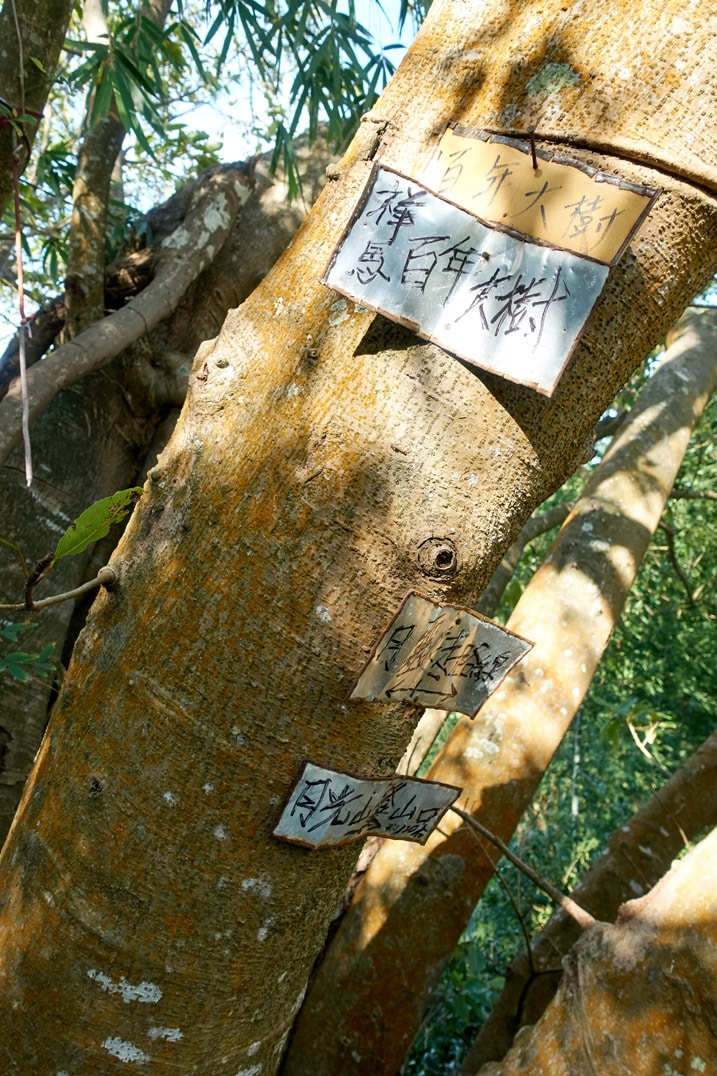 Signs in Chinese attached to a tree - 旗月縱走