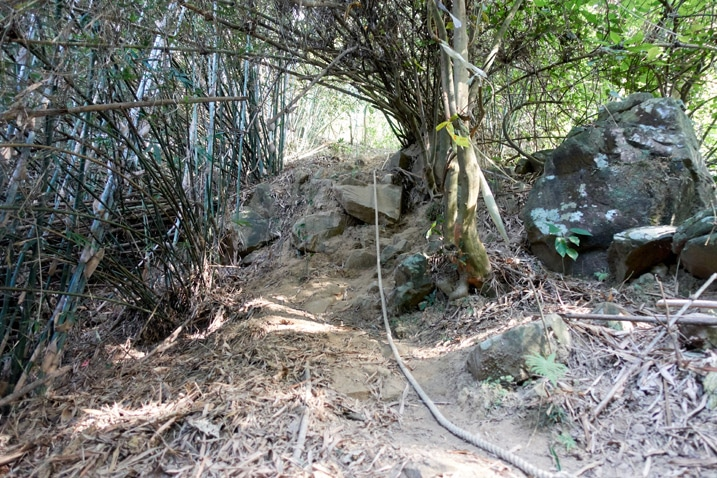 Uphill trail with rope and bamboo trees - 旗月縱走