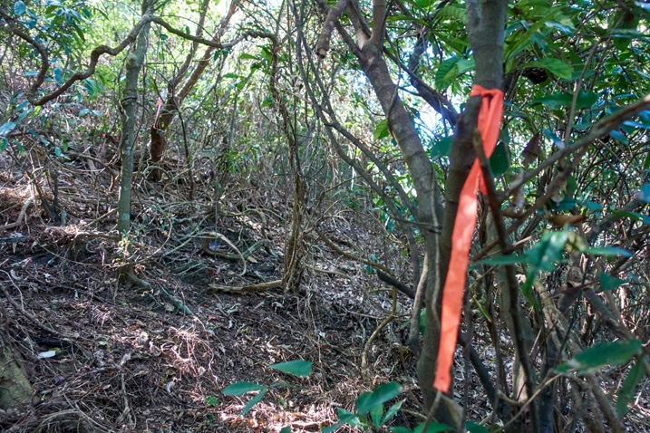 Orange ribbon tied to tree in forest - XinZhiShan - 新置山