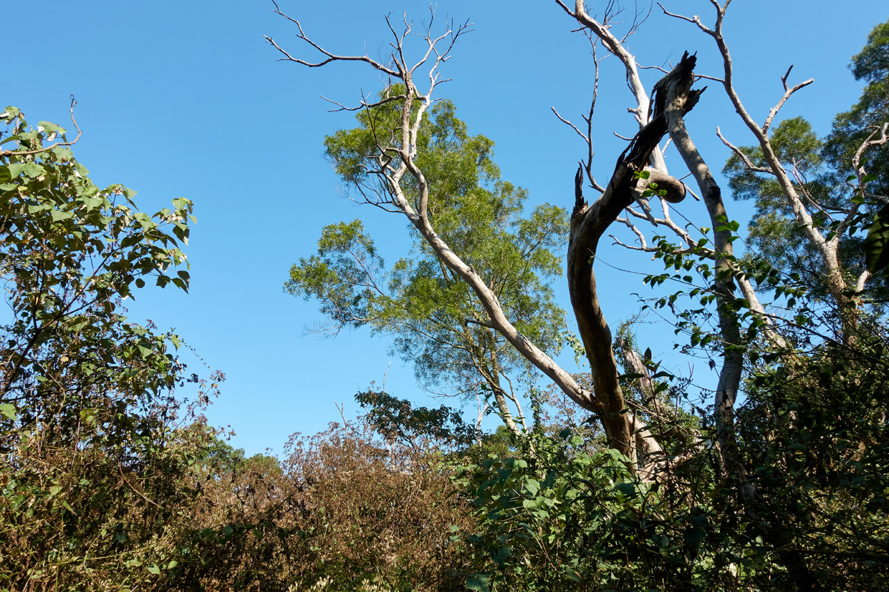 Blue sky and trees - XinZhiShan - 新置山