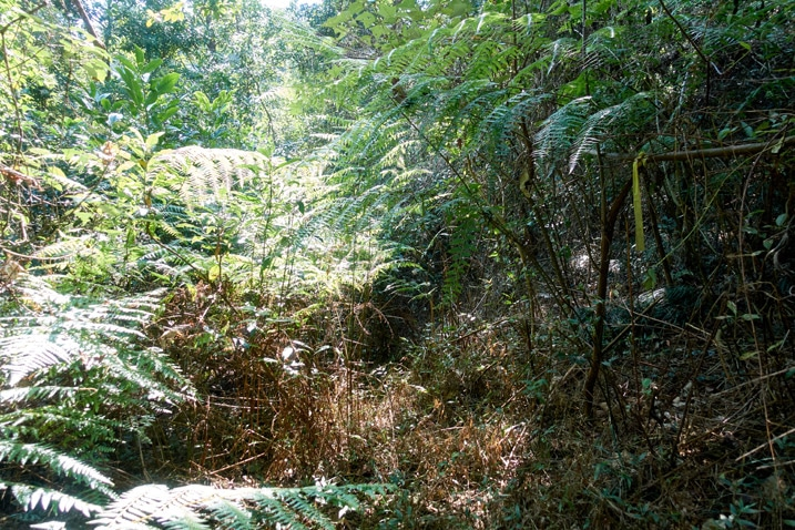 dense jungle - XinZhiShan - 新置山