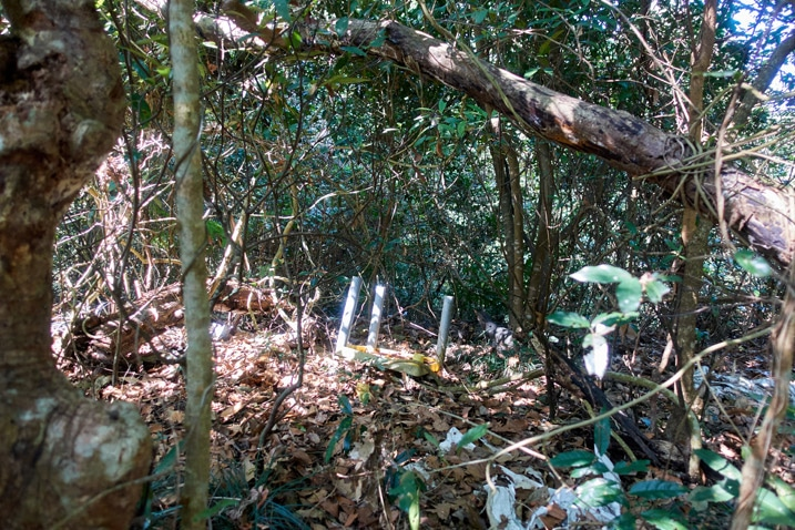 Broken upside-down plastic table in forest - XinZhiShan - 新置山 Peak