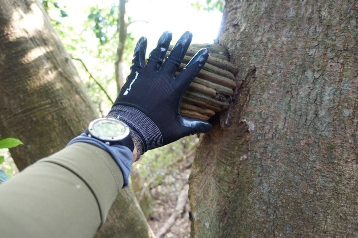 Large Hoof Fungus on tree - XinZhiShan - 新置山