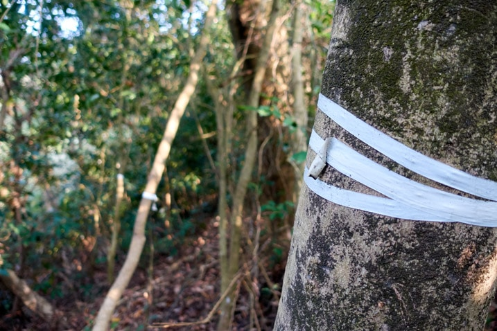 White tape wrapped around tree - WuTanShan - 武潭山