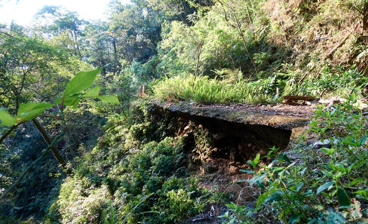 Old road with overgrowth all around - bottom of road is being hollowed out - 蕃里山 - FanLiShan