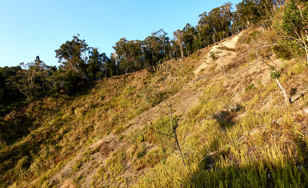 Old landslide - no trees - just grass - 蕃里山 - FanLiShan