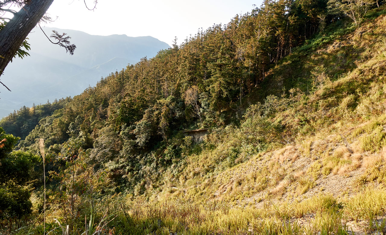 Old landslide with grass growth - trees beyond - 蕃里山 - FanLiShan