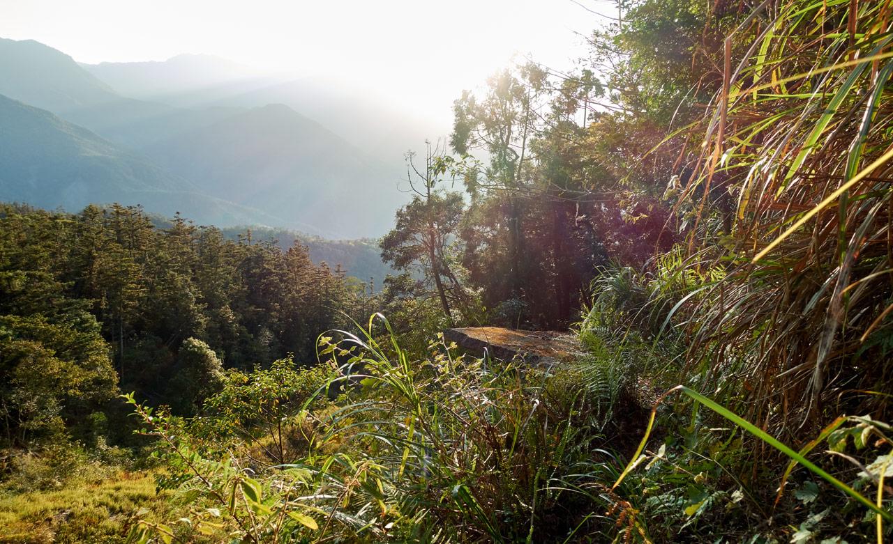 Old broken road from a landslide - lot of trees and vegetation - 蕃里山 - FanLiShan