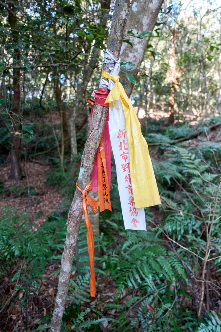 Several trail ribbons tied to a tree