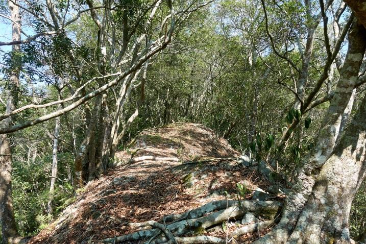 Mountain ridge trail - many trees