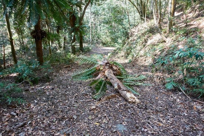 Fallen tree on a mountain road