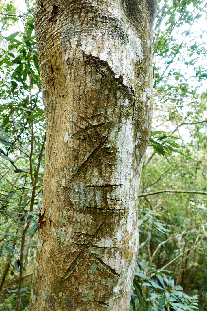 Tree with unknown carvings