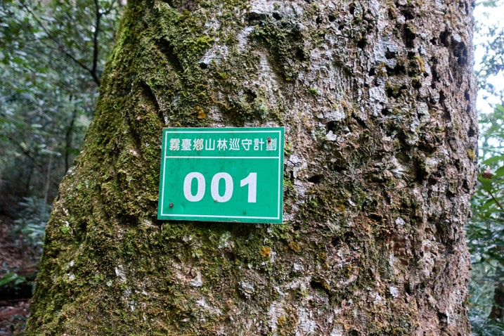 "Tree with green government sign with ""001"" and Chinese written on it"