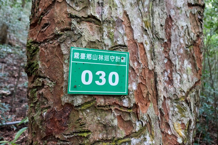"Tree with green government sign with ""30"" and Chinese written on it"