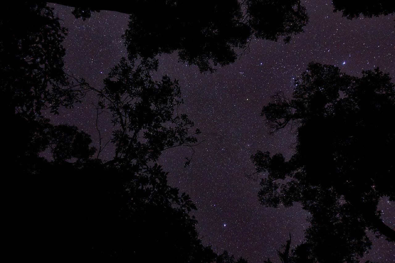 Star filled sky with trees