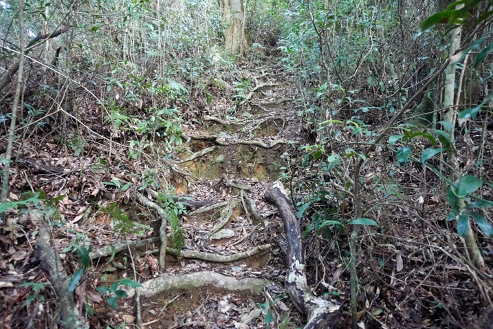 Rooted trail going up a mountainside