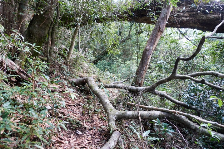 Fallen tree over mountain trail