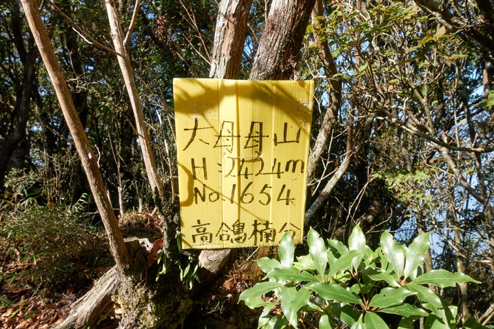 Yellow sign with Chinese attached to tree