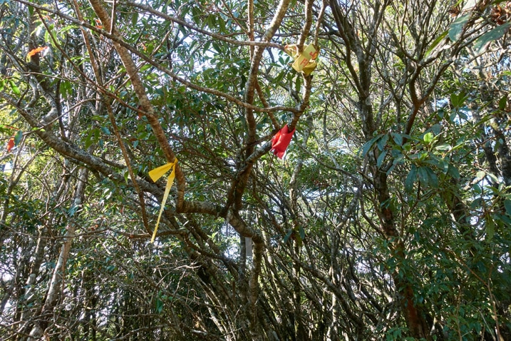 Red and yellow ribbons tied to tree branches