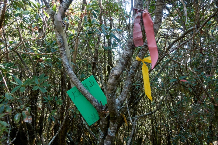 Red and yellow ribbons tied to tree branches - green sign attached to tree