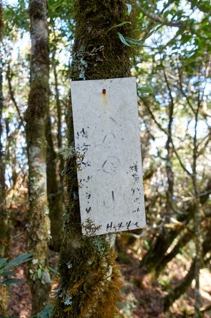 White sign with faded Chinese writing attached to a tree