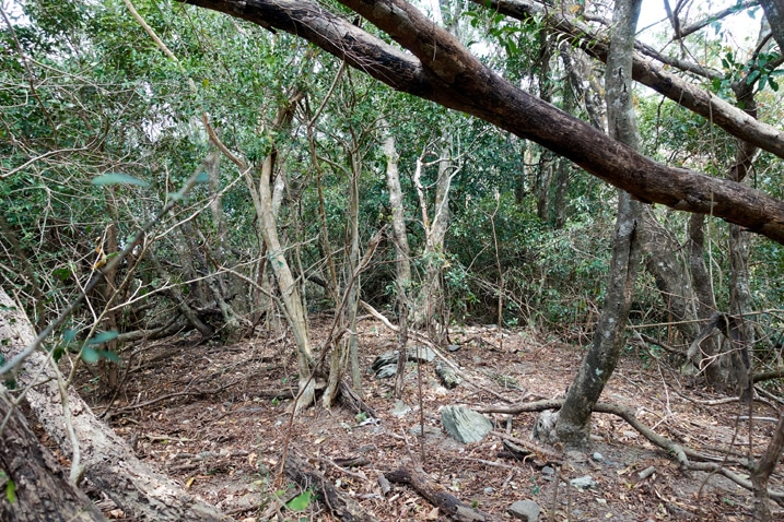 Overgrown jungle and fallen trees