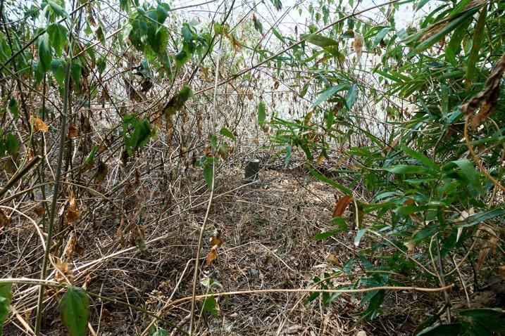 Triangulation stone hidden in overgrowth
