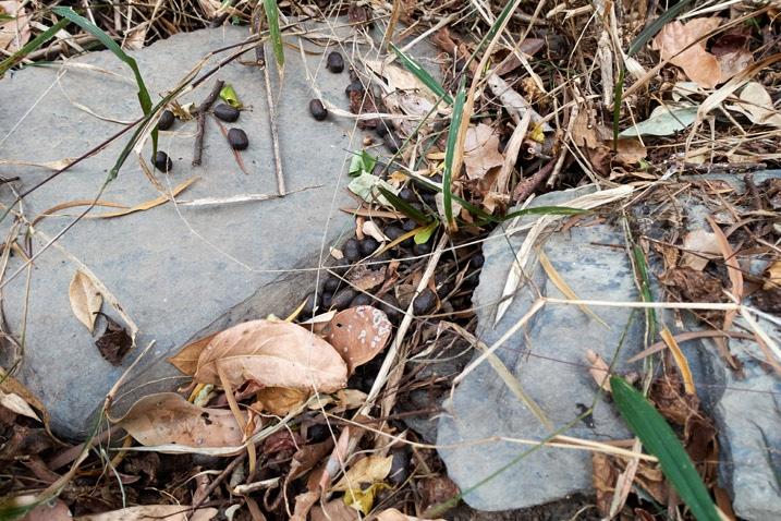 Animal scat on stones