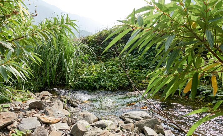 Small river flowing near lush, green plants