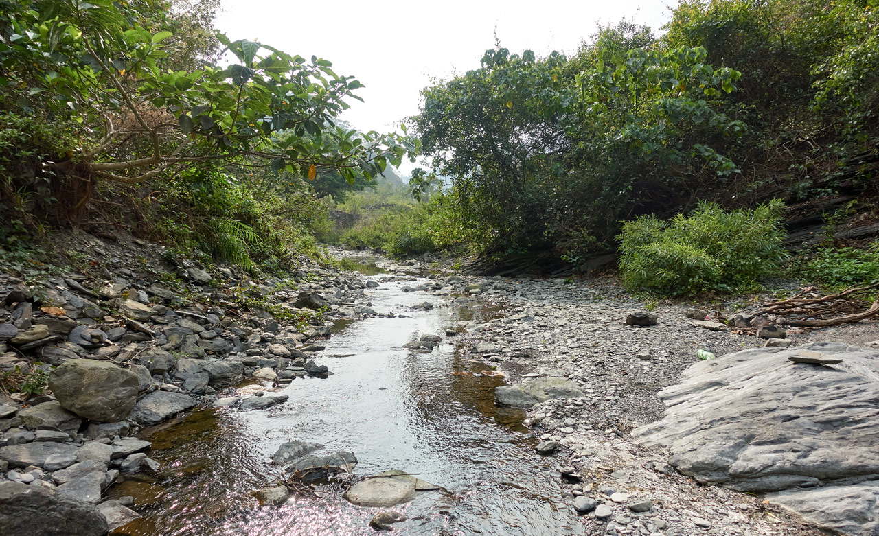 Small rocky stream lined with trees