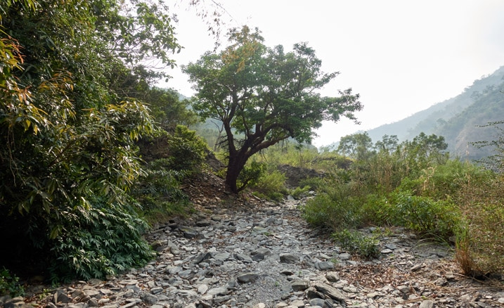 Small rocky stream with tree on left to the back