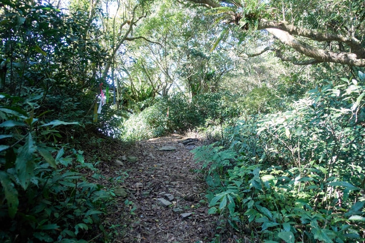 Trail - trees and plants on either side