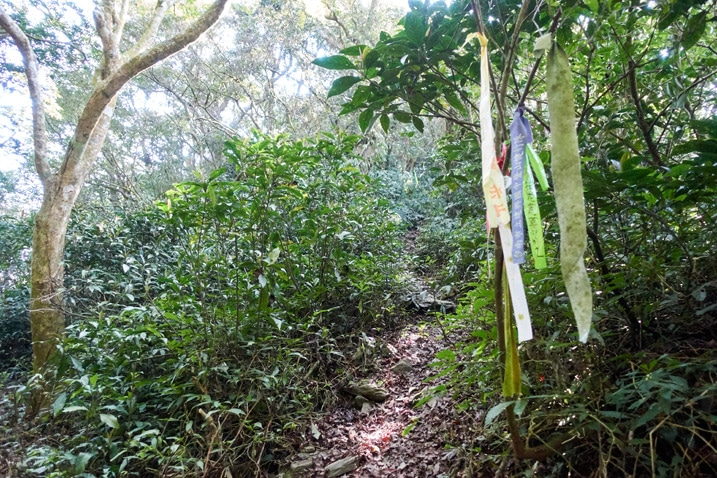 Trail with ribbons on tree next to it - plants on either side