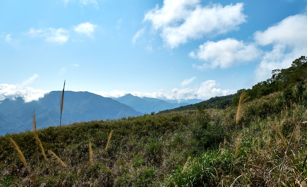 Tall grassy area with mountains in distance